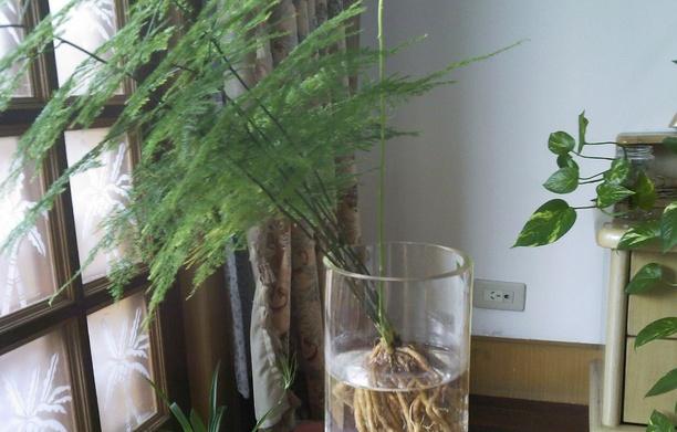卧室放什么植物风水好 家里放什么植物风水好